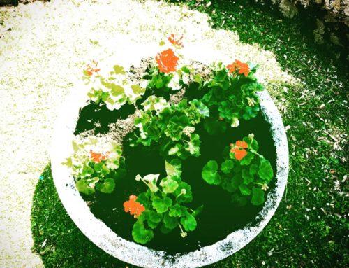 """""""Far fiorire"""" i giardini"""